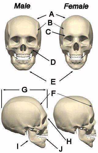 Name:  skull1.jpg Views: 92211 Size:  29.7 KB